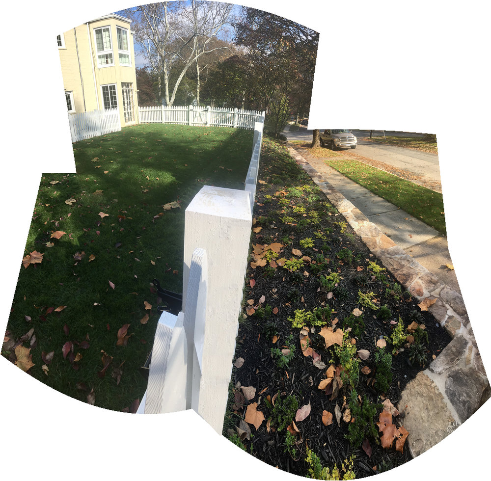 Early post-installation - fall 2017. proposed ground covers are projected to fill in mulch gaps in-between plantings and provide anti-erosion root mat (what you see is an even mix of: catmint, toadflax, creeping jenny, creeping phlox, candytuft, stonecrop, lithodoro & creeping thyme)