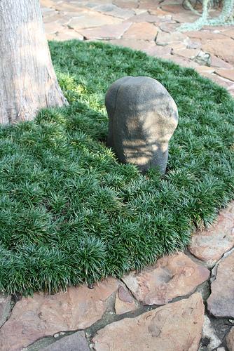 Dwarf Mondo Grass 2.jpg