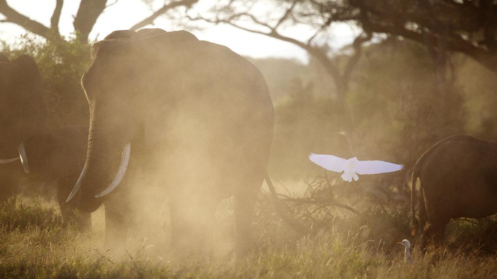 Kenya 2014 - ©Benjamin Sadd @trailtoanywhere 16053.jpg