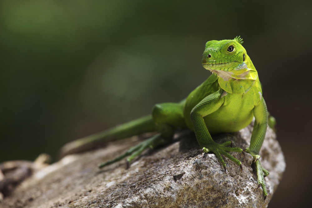 Opwall - Dominica 2014 © Benjamin Sadd 6803.jpg