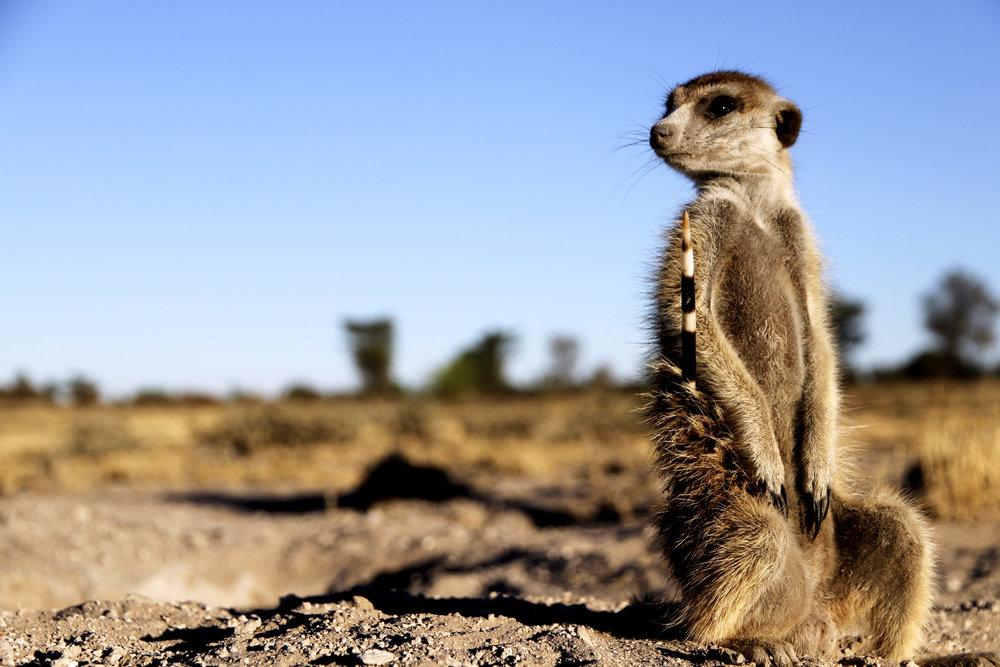 South Africa - ©Benjamin Sadd @trailtoanywhere 15932.jpg
