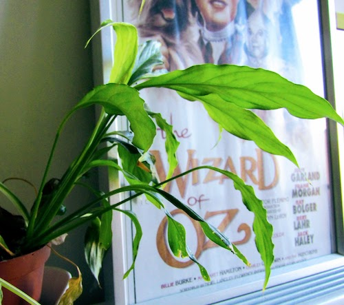 Little Peace Lily.jpg