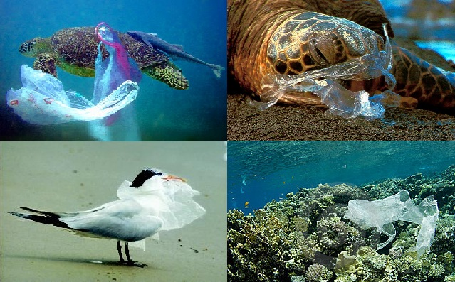 Plastic in the ocean.jpg