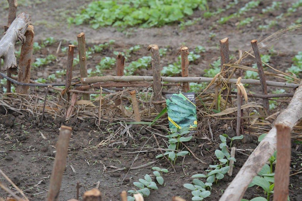 3-Agriculture cucumber nursery.jpg