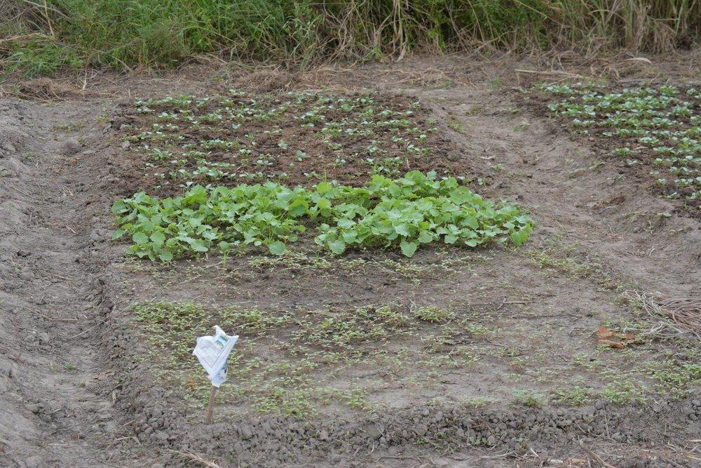 3-Agriculture nursery.jpg
