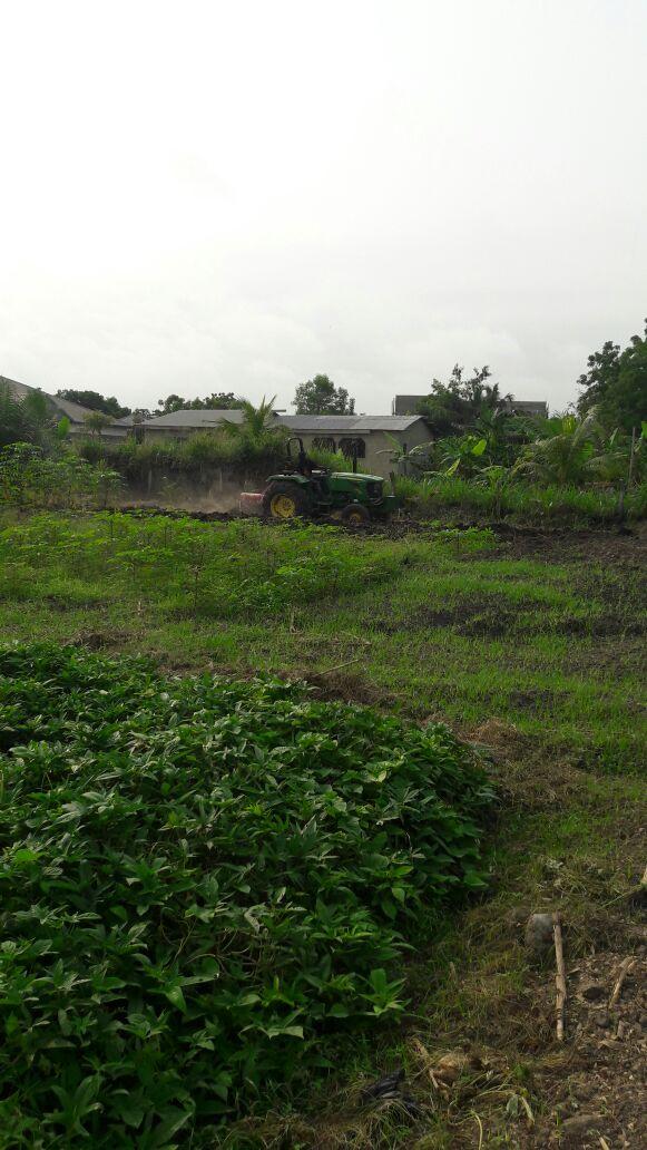 3-Agriculture.jpg