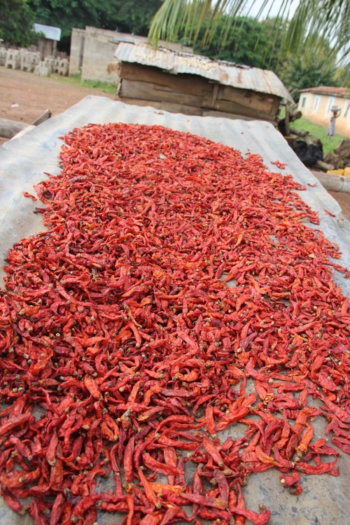 peppers out to dry.jpg