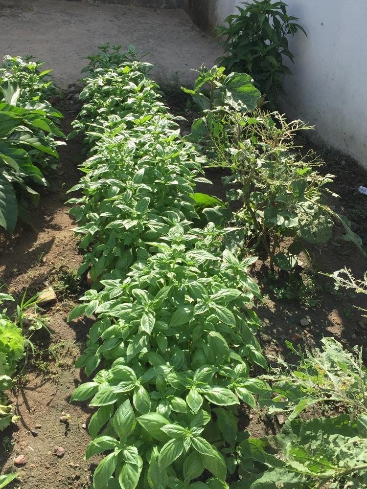 PHDA kitchen garden.png