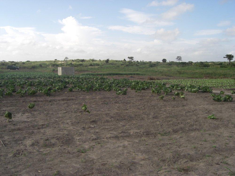 PHG farm in 2006.jpg