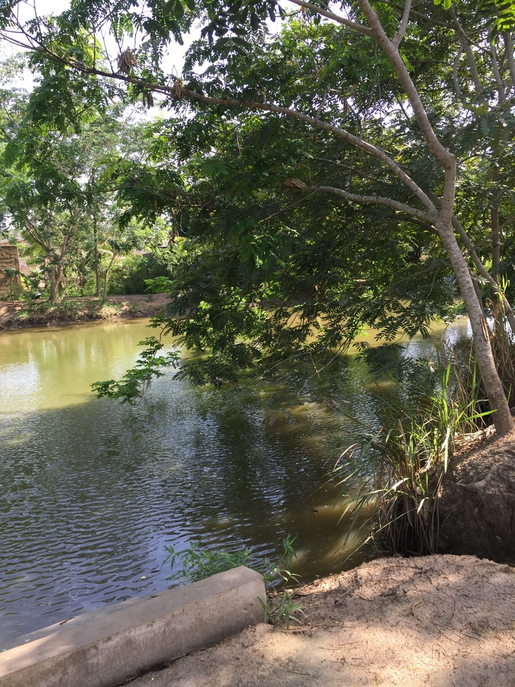 Pond at PHG farm.jpg