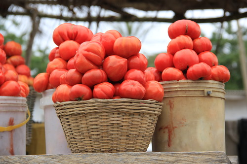 tomatoes in a basket more.jpg