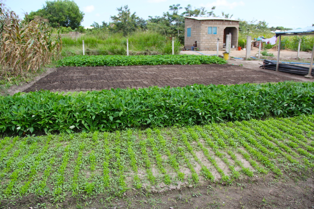 PHG farm in 2008.png