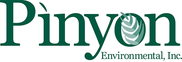 Pinyon Logo_color_transparent background.png