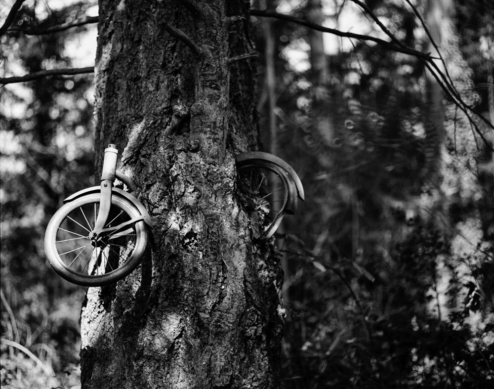 BikeTree_Med1_small.jpg