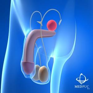 prostata-300x300.jpg