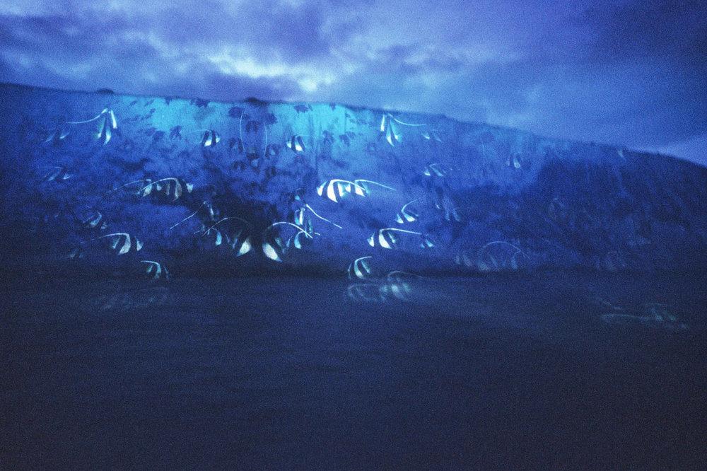 Nr-02-Dover-Klippen-Fische.jpg