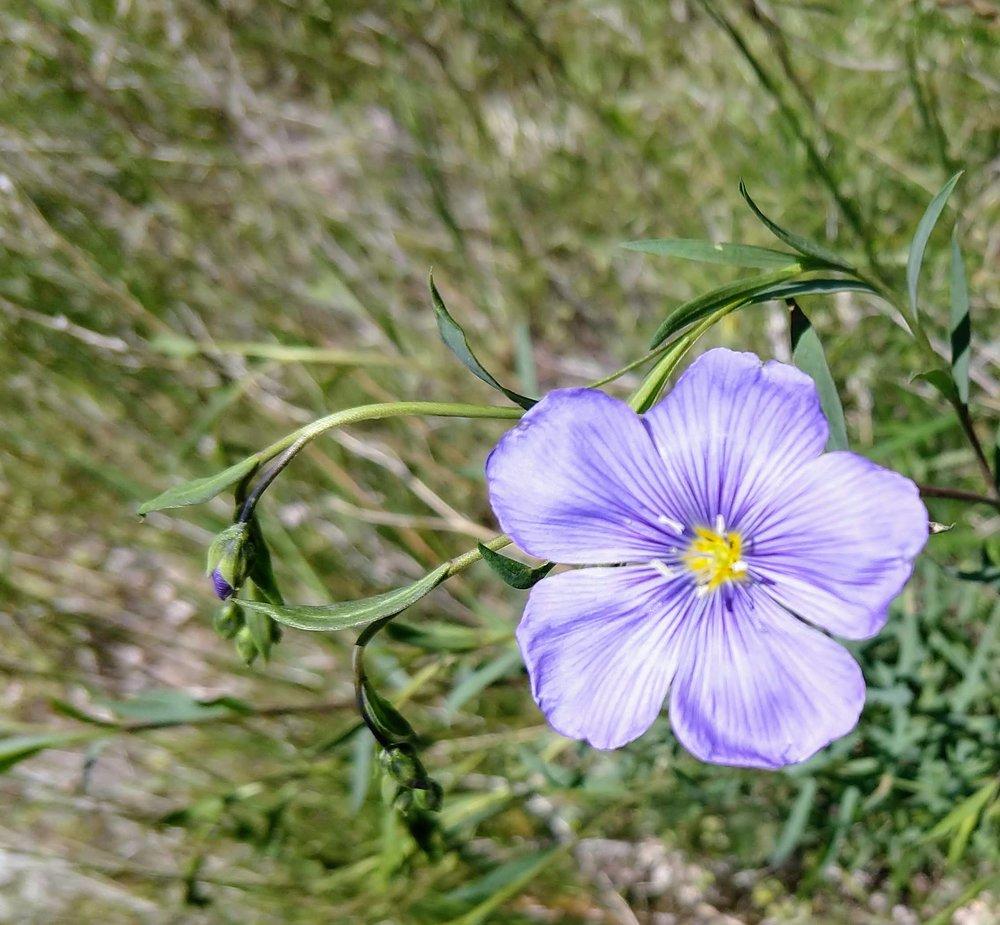 flower 1 .jpg