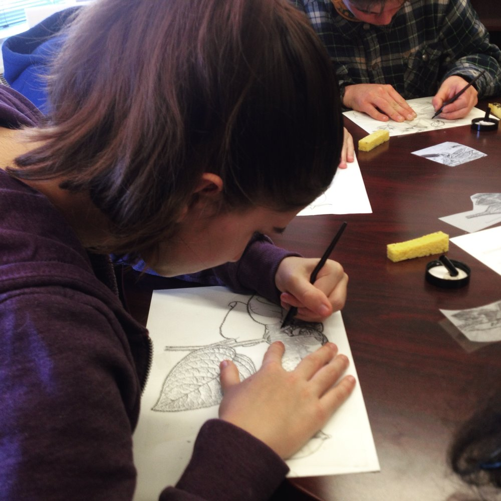 Art Class Working with Smithsonian Scientific Illustrator 4.jpg