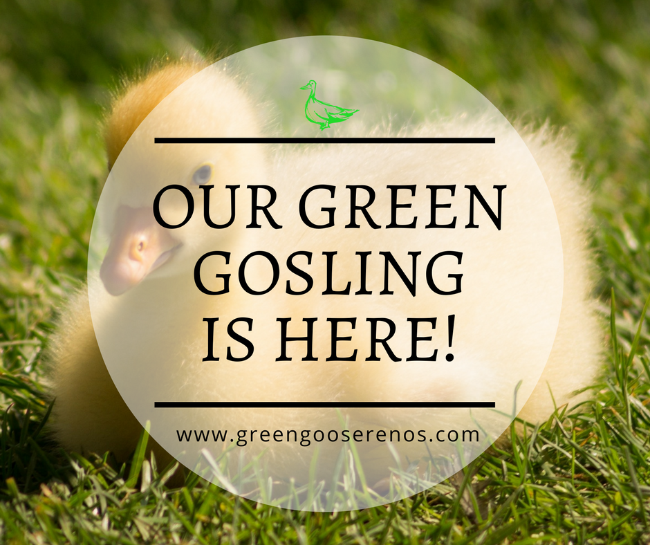 green-gosling-here.png