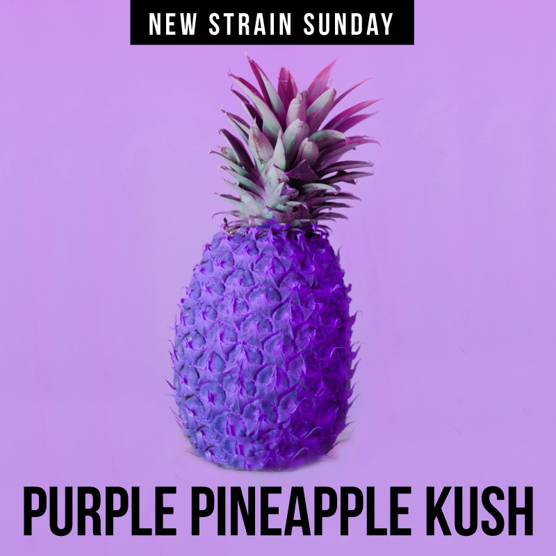 CCM-purple-pineapple.jpeg