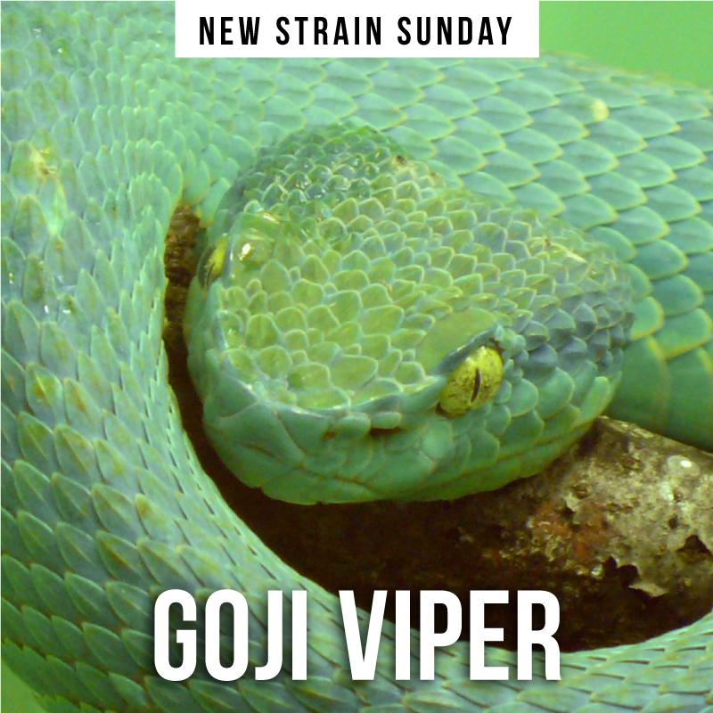 CCM-Viper2.jpg