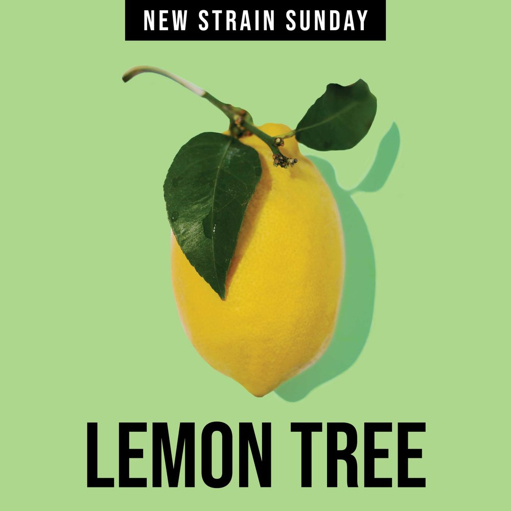CCM-Lemon_Tree.jpg