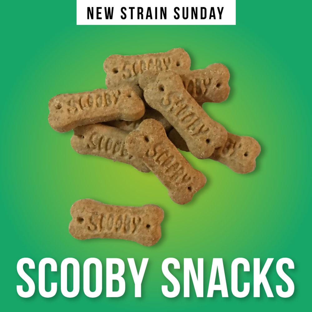 CCM-scooby-snacks.jpg