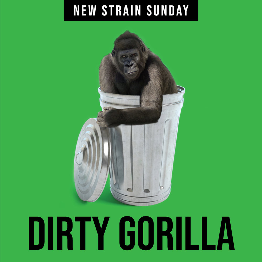 CCM-Dirty_Gorilla.jpg