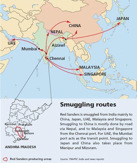 sandalwood smuggling asia