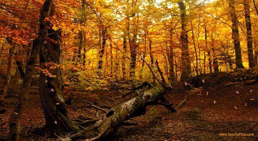 ecran-veille-automne6.jpg