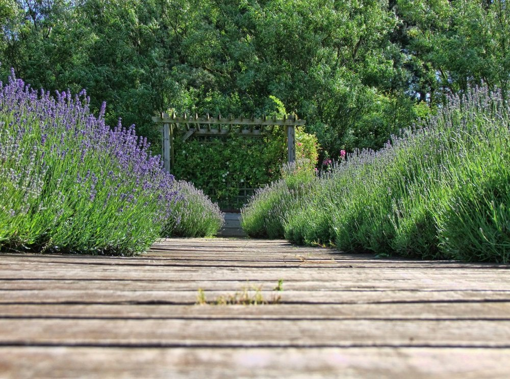 lavender_nature_purple_flower_herb_natural_aromatherapy_summer-593715.jpg