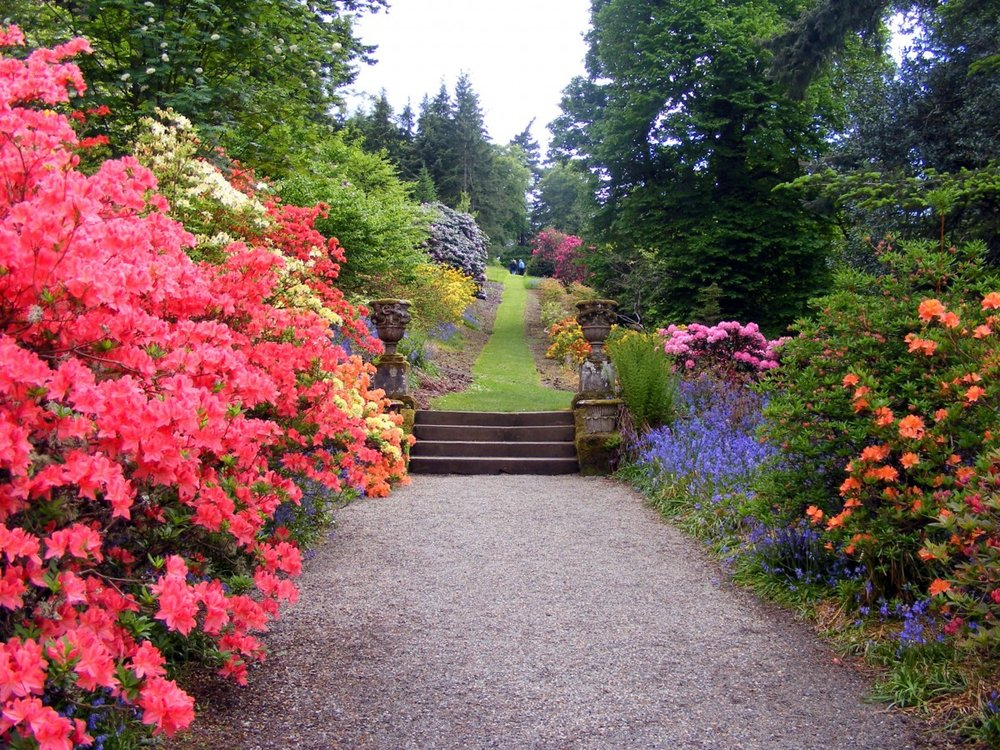 garden_flowers_bushes_path_tree_grass_design_blossom-1332946.jpg