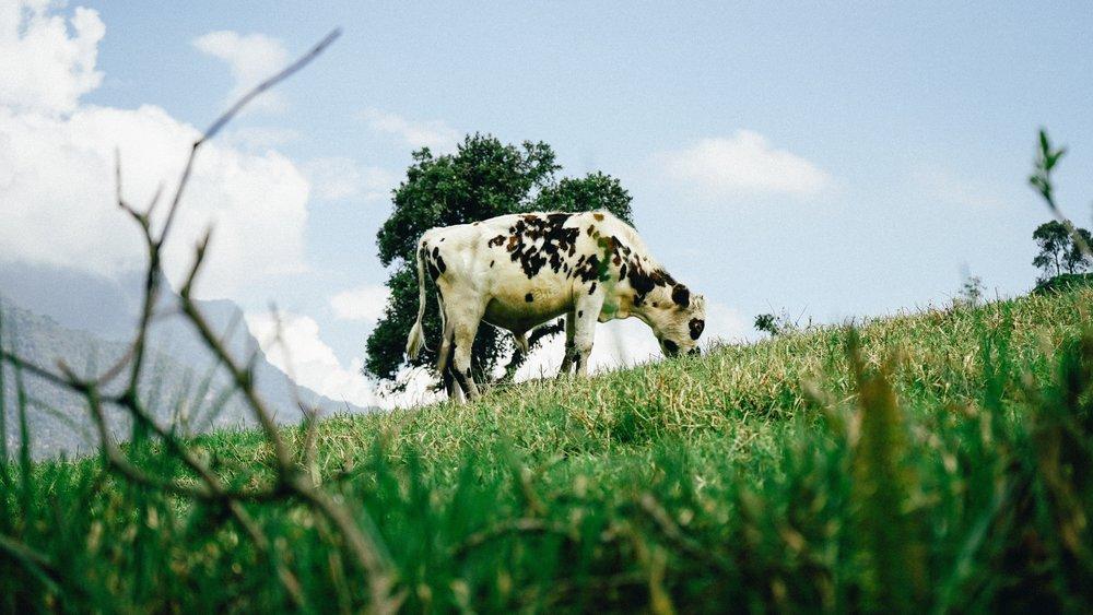 CAIF_publicatie_lactosevrijgenieten