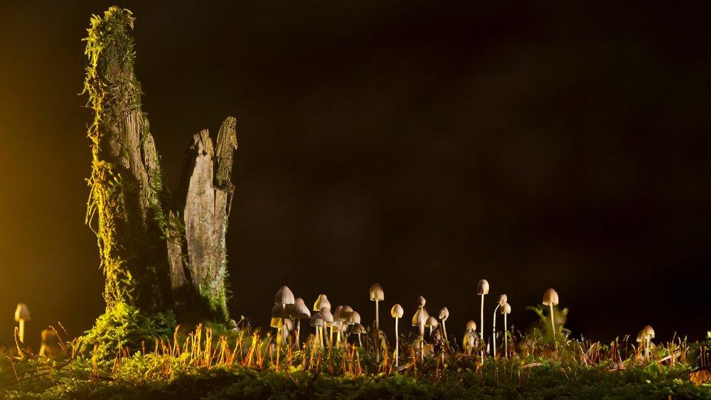 mushrooms-2212899_1920.jpg