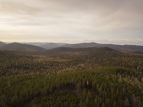 Die weiten Wälder Olkhons präsentieren sich in herbstlichen Farben