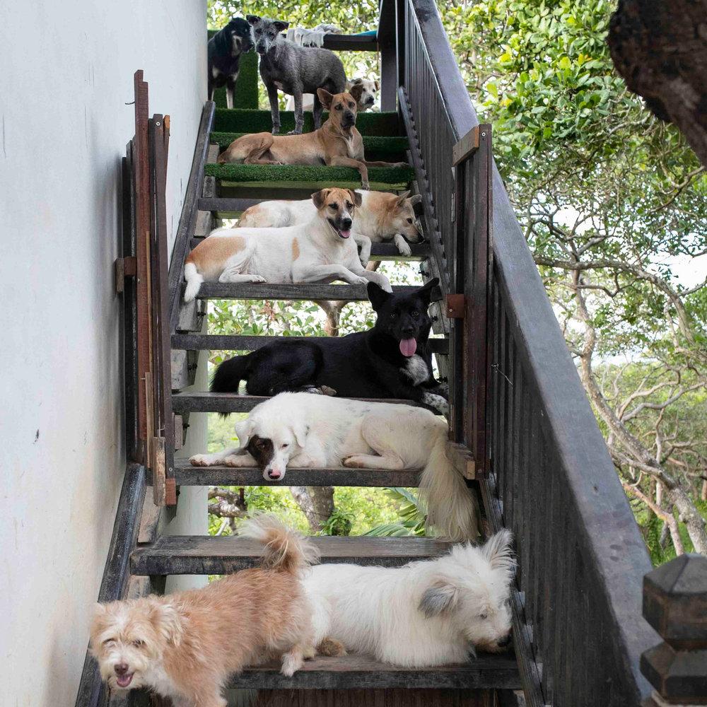 Koh Phayam Haus Sitter.jpg