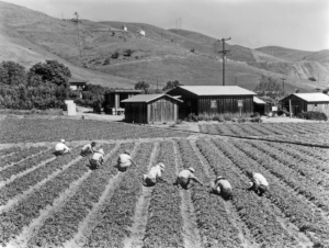 Picture1940sberryPickers.jpg