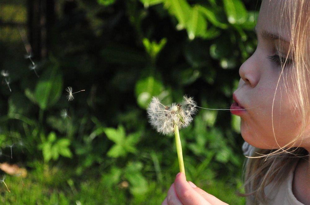 Child blowing a dandelion.jpg