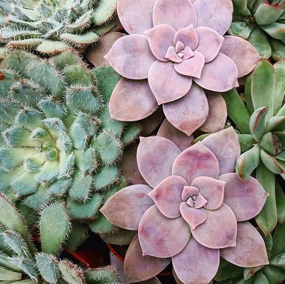 plants5.png