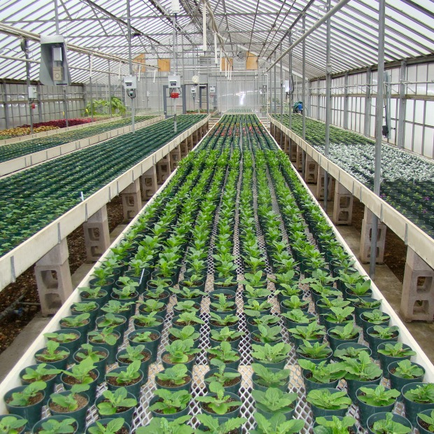 Greenhouse plants 2.jpg