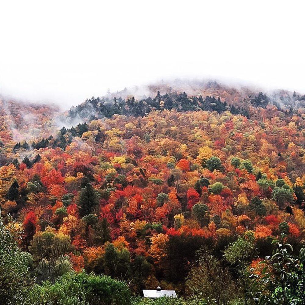 Favorite Fall Instagrams | katiekubitz.com