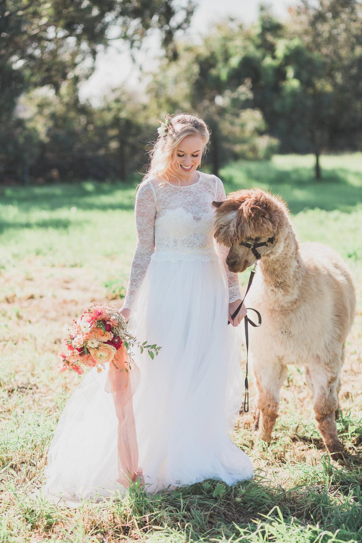 alpaca-styled-shoot-2017-161.jpg