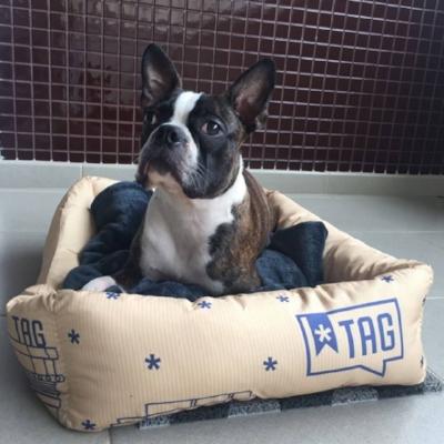 Camas para cães e gatos da TAG ajudam a expandir a marca