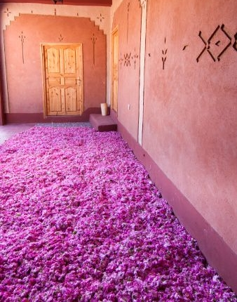 rose room a.jpg
