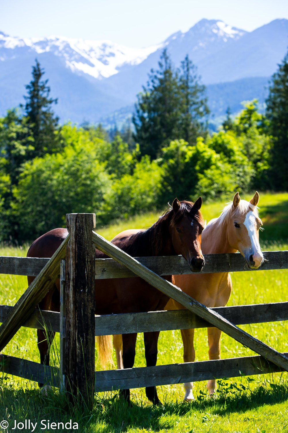 Two horses lean over a fence together with a mountain view in th