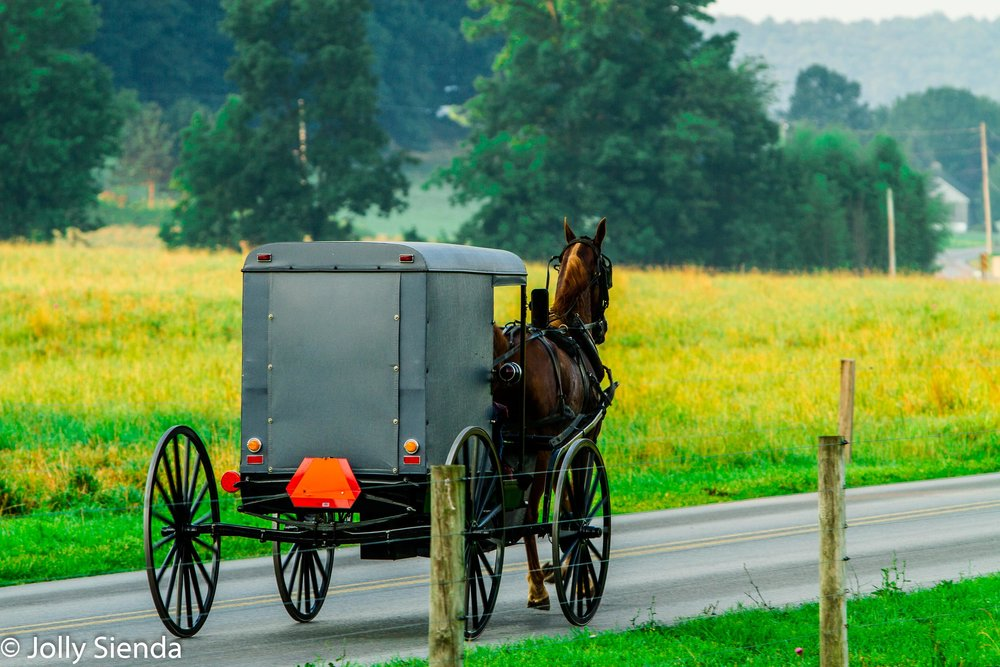 An Amish Grey Buggy and Horse, Clop Along the Road