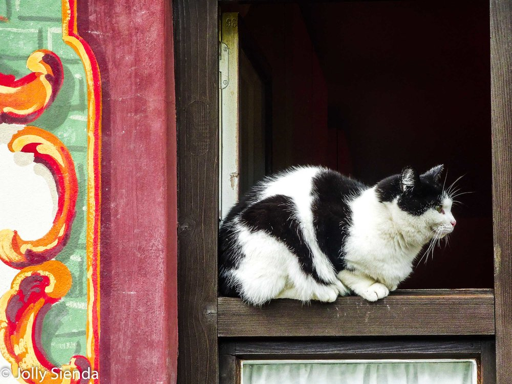Tuxedo cat sits on a window ledge of a tole painted building, Oberammergau, Germany. This cat reminded me of my kitty, Topaz, also a Tuxedo cat and a charmer!