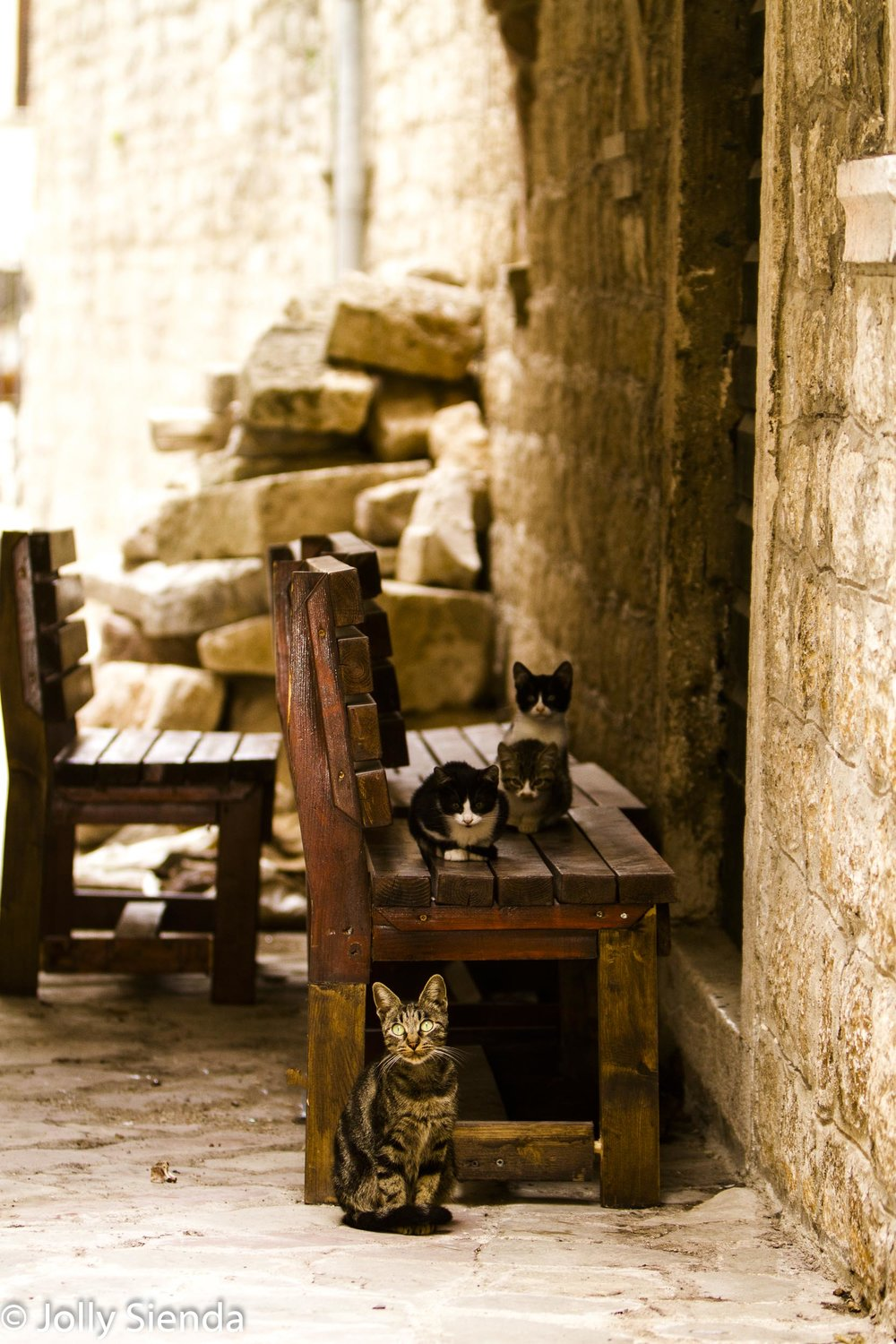 Kittens sit on a bench, while the mother cat stands guard