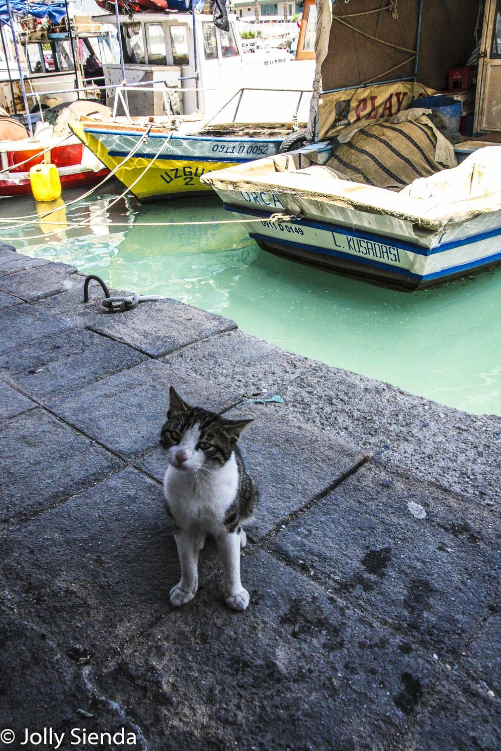 Cat begs for food at the Kusadasi Marina