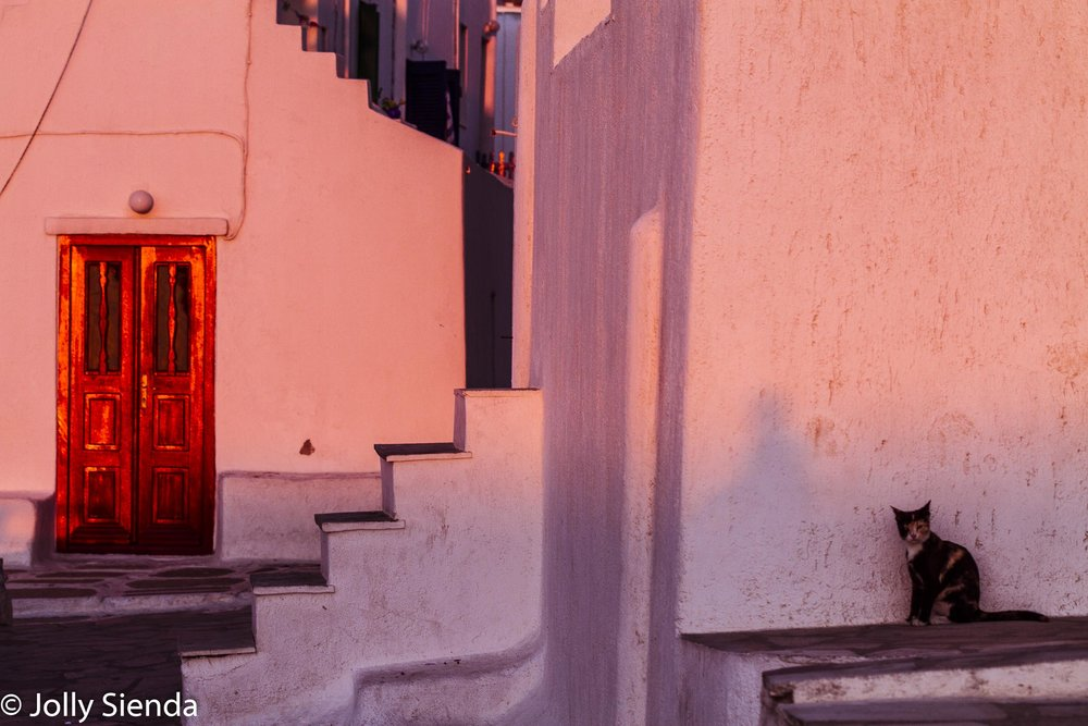Red Door and the Calico Cat at Sunset, fine art photography